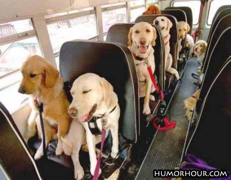 Dogs on their way to school