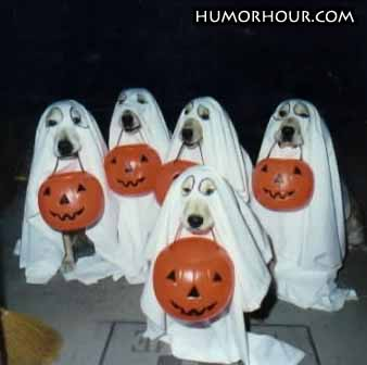 Dogs want candy to