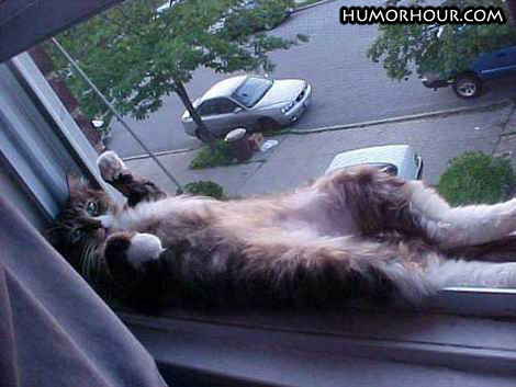 Cat relaxing in the window